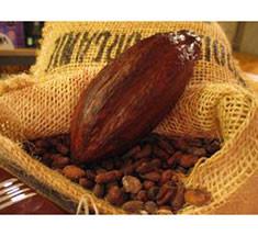 Le chocolat, étape 2 : la transformation des fèves