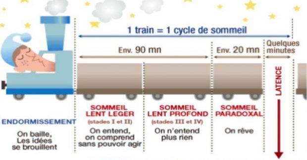 Les cycles du sommeil [SVT-AP]