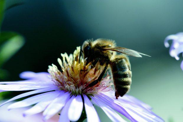 Les différents métiers d'une abeille
