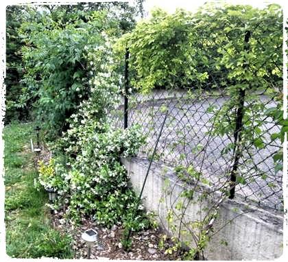Avec l'action Initiatives-fleurs, chaque année je fleuris peu à peu mon jardin [Témoignage]