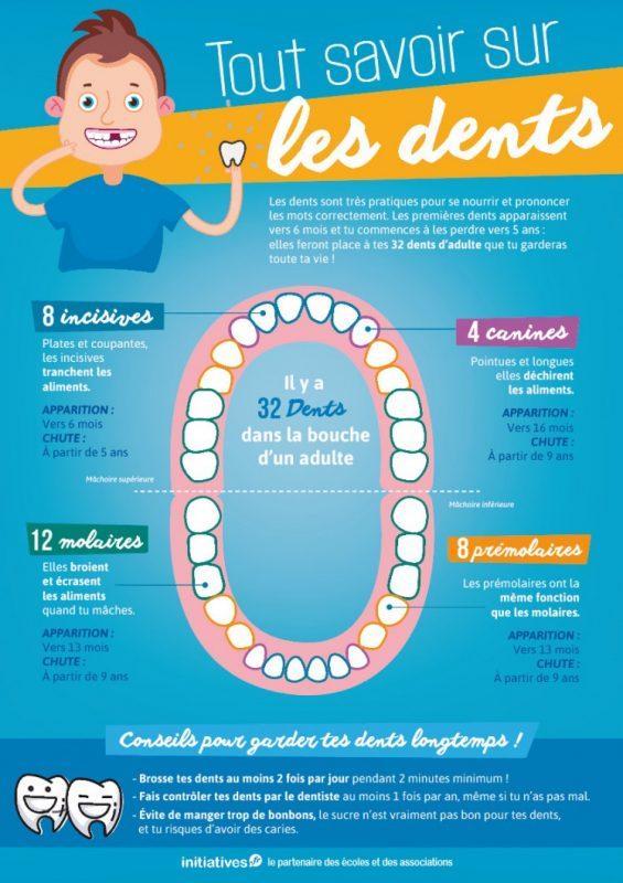 infographie tout savoir sur les dents