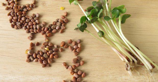 Faites pousser des graines dans des bocaux, avec les enfants !