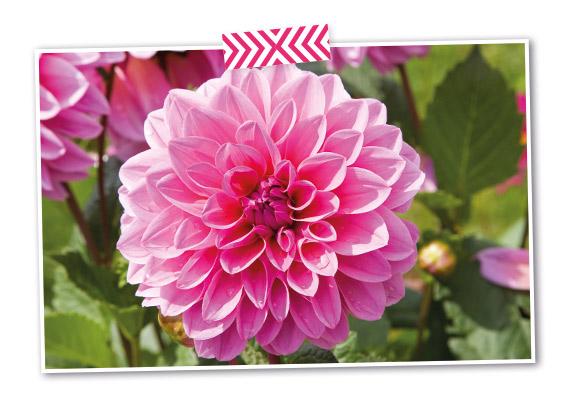 fleurs pour associations sportives