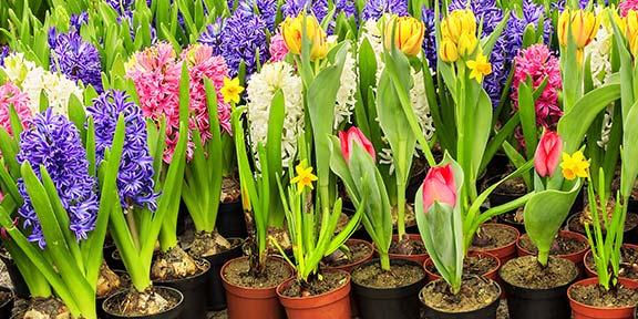 Organiser une vente de fleurs