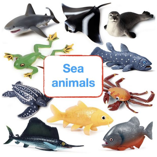 Sea animals and clothes